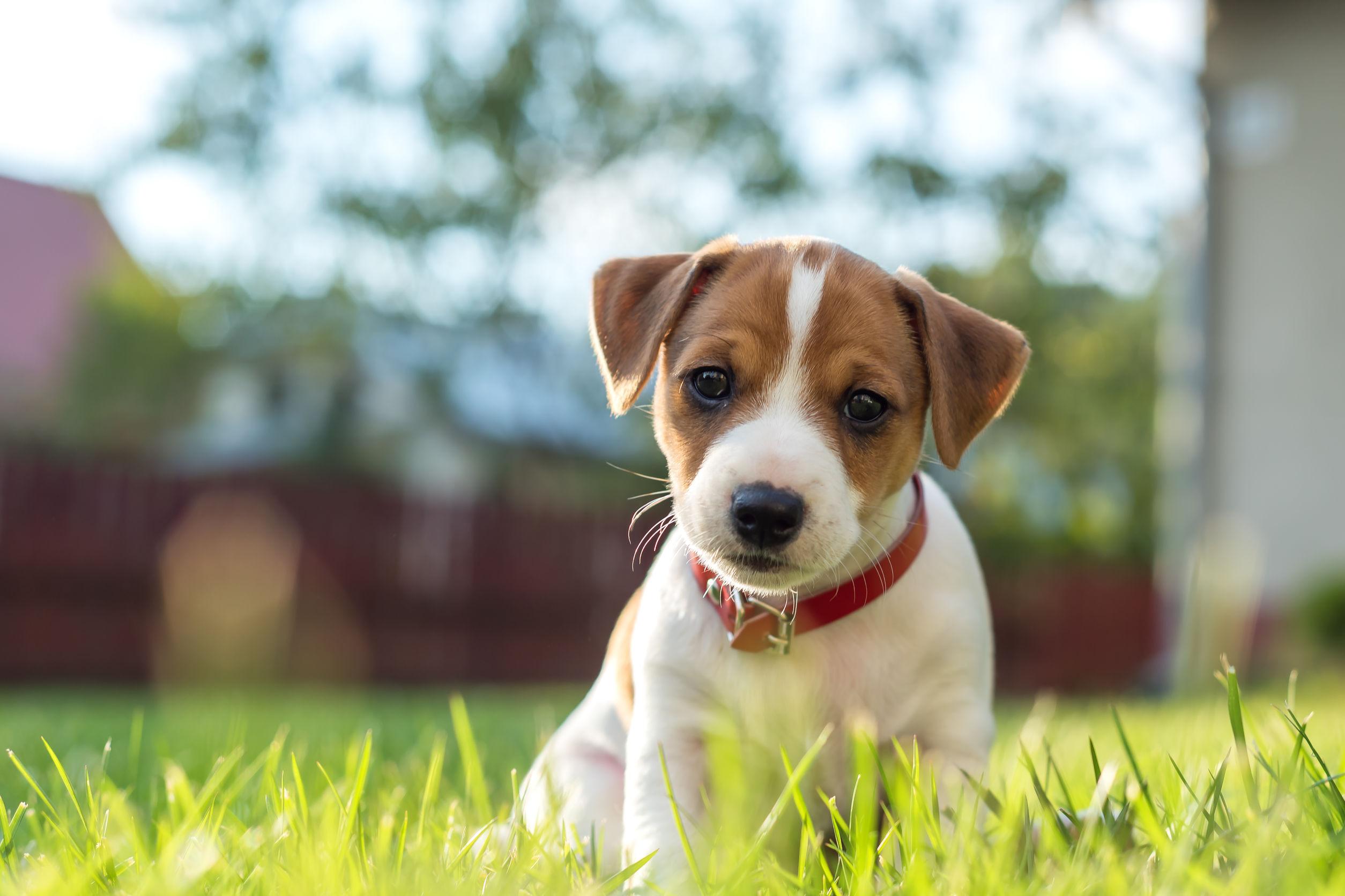 Desparasitante para perros: ¿Cuál es el mejor del 2020?