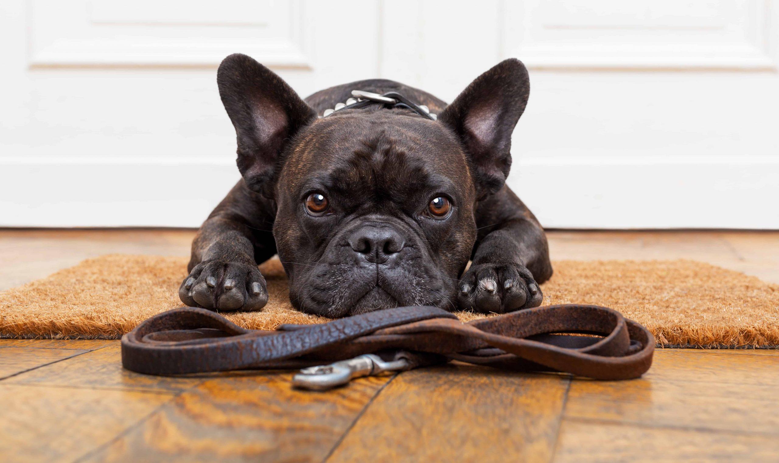 Correas para perros: ¿Cuáles son las mejores del 2021?