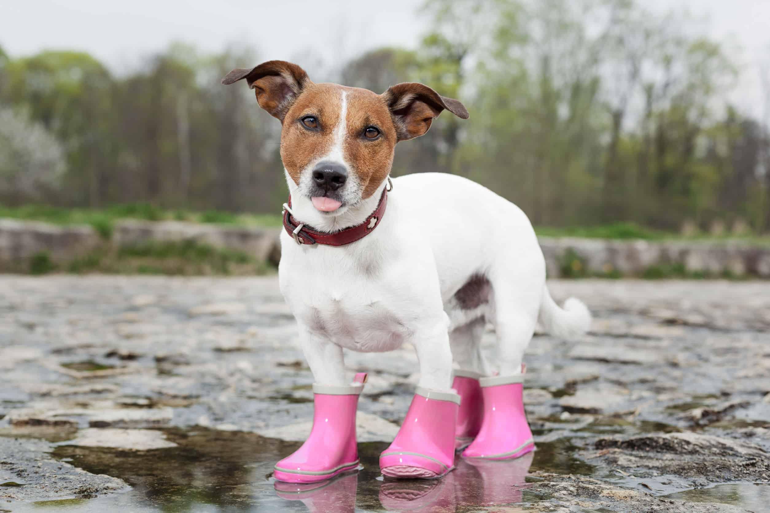 Zapatos para perros: ¿Cuáles son los mejores del 2020?