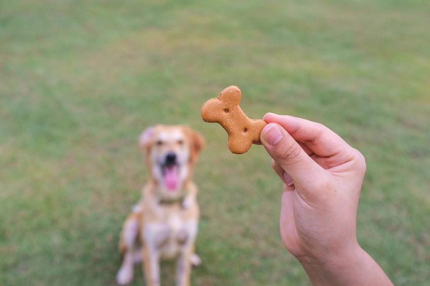 entrenando perro
