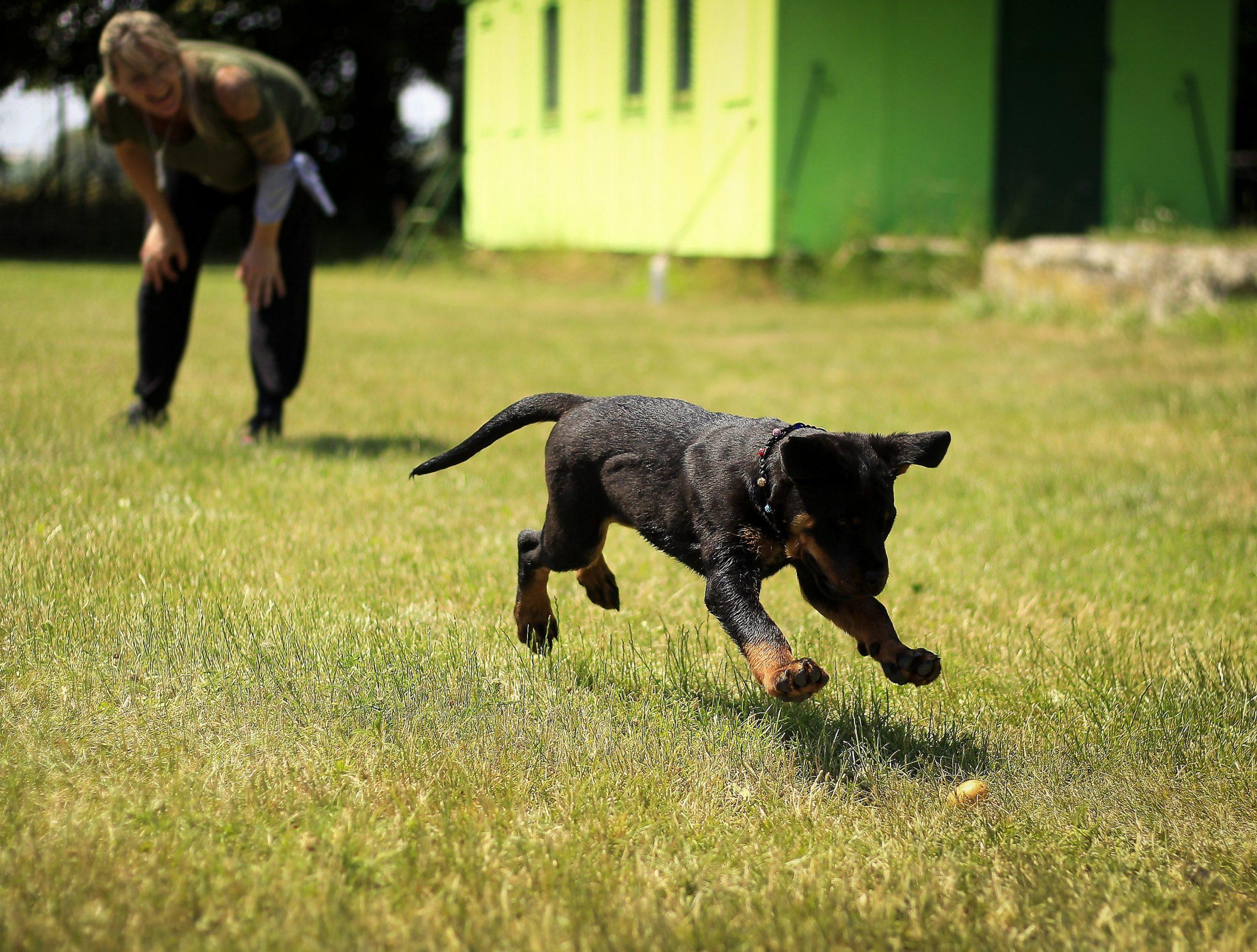 Perro jugando con su dueño al aire libre