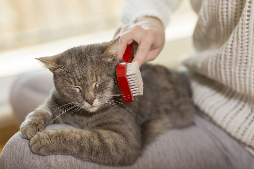 gato siendo cepillado